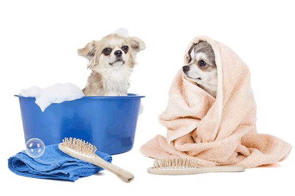 grooming from Maritas Animal care