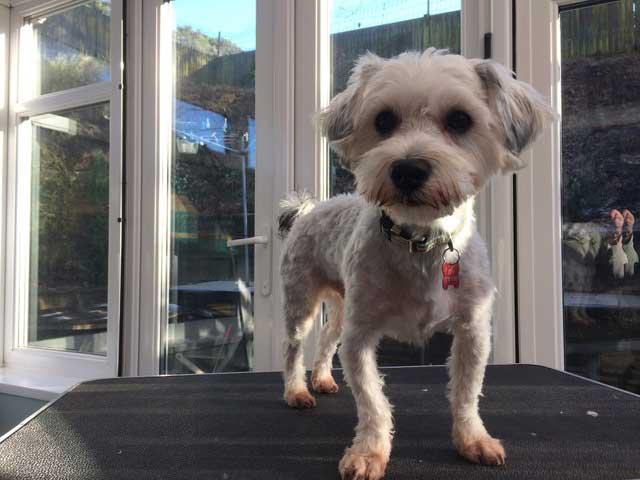 maritas dog grooming clients