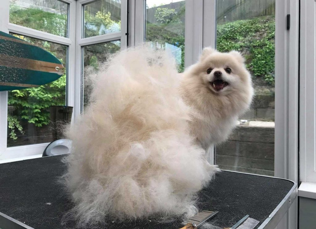 happy dog grooming clients from maritas animal care
