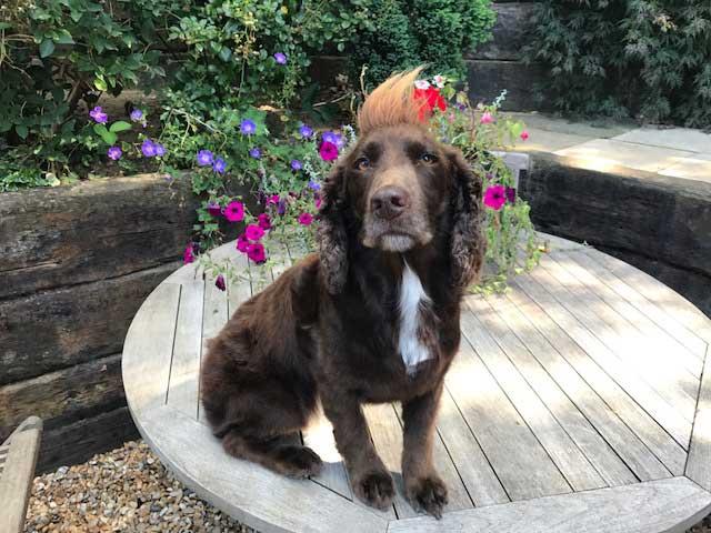 maritas animal care dog grooming